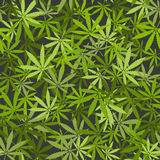 Marijuana leaves seamless background Stock Photography