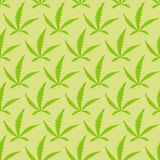 Marijuana leaves seamless pattern. VEctor  Narcotic  background Royalty Free Stock Image