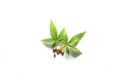 Marijuana Leaves and Seeds. Leaves and seeds from the cannabis plant, hemp, or marijuana on white background Stock Photo