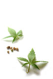 Marijuana Leaves and Seeds. Leaves and seeds from the cannabis plant, hemp, or marijuana on white background Royalty Free Stock Image