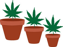 Marijuana Leaves in Terra Cotta Flower Pots Stock Photos