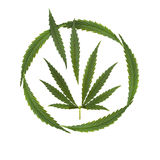 Marijuana legalized - creative collage. Hemp leaf - Marijuana (Cannabis&#x29 Royalty Free Stock Photo