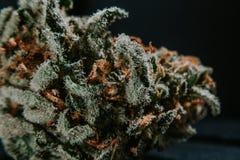 Marijuana médica, cáñamo, Sativa, Indica, Trichomes, THC, CBD, curación del cáncer, mala hierba, flor, cáñamo, gramo, brote Imagenes de archivo