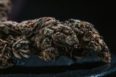 Marijuana médica, cáñamo, Sativa, Indica, Trichomes, THC, CBD, curación del cáncer, mala hierba, flor, cáñamo, gramo, brote fotografía de archivo