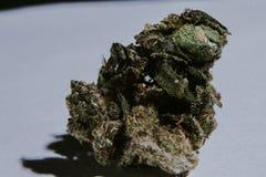 Marijuana médica, cannabis, Sativa, Indica, Trichomes, THC, CBD, cura do câncer, erva daninha, flor, cânhamo, grama, botão Fotos de Stock Royalty Free