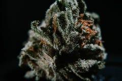 Marijuana médica, cannabis, Sativa, Indica, Trichomes, THC, CBD, cura do câncer, erva daninha, flor, cânhamo, grama, botão Fotografia de Stock Royalty Free