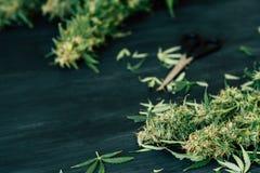 Marijuana médica recentemente colhida crescida em casa O fim acima de um cannabis sae após a aparagem healing Saúde mental Botão fotografia de stock