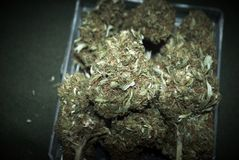 Marijuana médica RX Imagenes de archivo