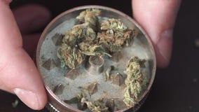 Marijuana médicale sur la table La main du ` s d'homme met la marijuana dans une broyeur d'herbe pour le meulage banque de vidéos