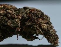 Marijuana medica, cannabis, sativa, indica, tricomi, THC, CBD, cura del cancro, erbaccia, fiore, canapa, grammo, germoglio Fotografia Stock Libera da Diritti