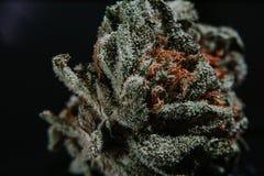Marijuana medica, cannabis, sativa, indica, tricomi, THC, CBD, cura del cancro, erbaccia, fiore, canapa, grammo, germoglio Immagini Stock Libere da Diritti