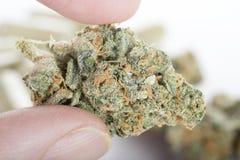 Marijuana medicinal fotografía de archivo libre de regalías