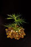 Marijuana and Money. Picture of Marijuana and Money Cannabis Business Concept Stock Image