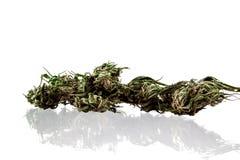 Marijuana på en vit bakgrund Royaltyfri Fotografi