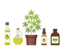Marijuana plant and cannabis oil. Medical marijuana. Hemp oil in a jar. CBD oil hemp products. Oil glass bottle mock up. Packaging product label and logo vector illustration