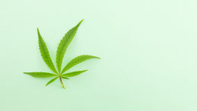 Marijuana plant on green background Stock Photo