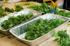 Marijuana que está sendo processada imagem de stock royalty free