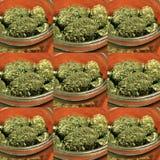 Marijuana RX Royalty Free Stock Photography