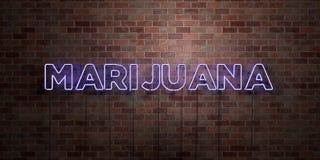 MARIJUANA - segno fluorescente del tubo al neon su muratura - vista frontale - 3D ha reso l'immagine di riserva libera della sovr royalty illustrazione gratis