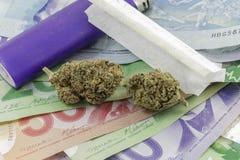 Marijuana slår ut på pengar med en tändare och en rullande legitimationshandlingar royaltyfri bild