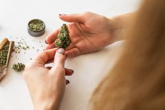 Marijuana use concept. Woman rolling a cannabis blunt on white background. Woman preparing and rolling marijuana cannabis joint. Close up of marijuana blunt royalty free stock images