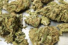 Marijuanaaffär i Amerika. Krukaogräs och pengar. Royaltyfria Bilder
