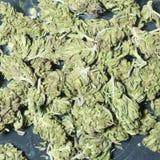 Marijuanabakgrund Arkivfoton
