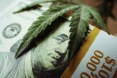 Marijuanablad på en bunt av hundra högkvalitativa dollarräkningar Arkivbilder