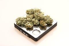 marijuanaläkarundersökning royaltyfri bild