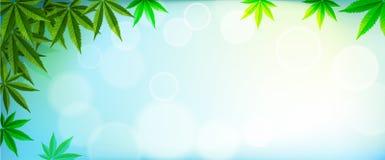 Marijuanaväxt och cannabis på blåa bakgrunder royaltyfri fotografi