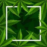 Marijuanaväxt och cannabis på grön bakgrund royaltyfri foto