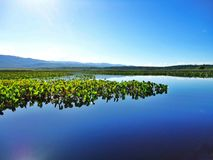 Marimbus沼泽地,巴西 库存照片