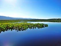 Marimbusmoerasland, Brazilië Stock Foto
