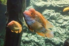 marin- akvarium i Hradec Krà ¡ lové i Tjeckien royaltyfri fotografi