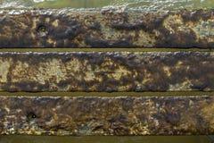 Marin- alger royaltyfria bilder
