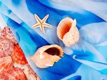 Marin- cockleshells på en mörkblå bakgrund Royaltyfria Bilder