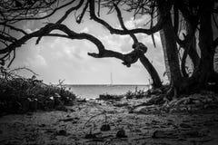 Marin de Tulum Images stock