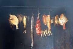 Marin- fisk royaltyfria bilder