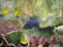 Marin- fisk Royaltyfri Bild