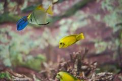 Marin- fisk Royaltyfri Fotografi