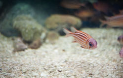 Marin- fisk Arkivfoto