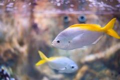 Marin- fisk Royaltyfri Foto