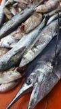 Marin- fisk Fotografering för Bildbyråer