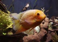 Marin- fisk Royaltyfria Foton