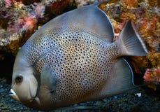 Marin- fisk i behållare Royaltyfri Fotografi