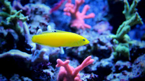 Marin- fisk i marin- akvarium Royaltyfria Foton