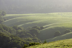 Marin rolling hills Stock Image