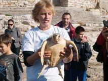 Marin- sköldpadda Arkivfoton