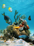 marin- surface vatten för livstid Arkivfoto