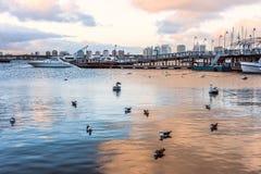 Marina av Punta del Este, Uruguay Arkivfoton